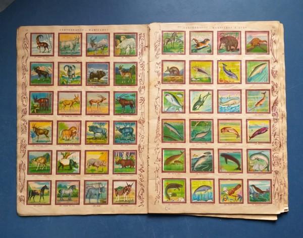 album das magicas figurinhas dos animais 3 Casa do Colecionador